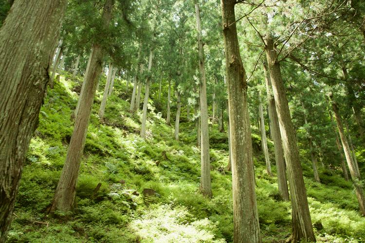 木の産地「吉野」